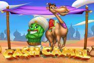 CASH CAMEL?v=1.8