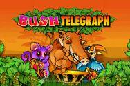 BUSH TELEGRAPH?v=2.8.6
