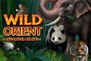 WILD ORIENT?v=1.8