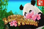 LUCKY PANDA?v=1.8